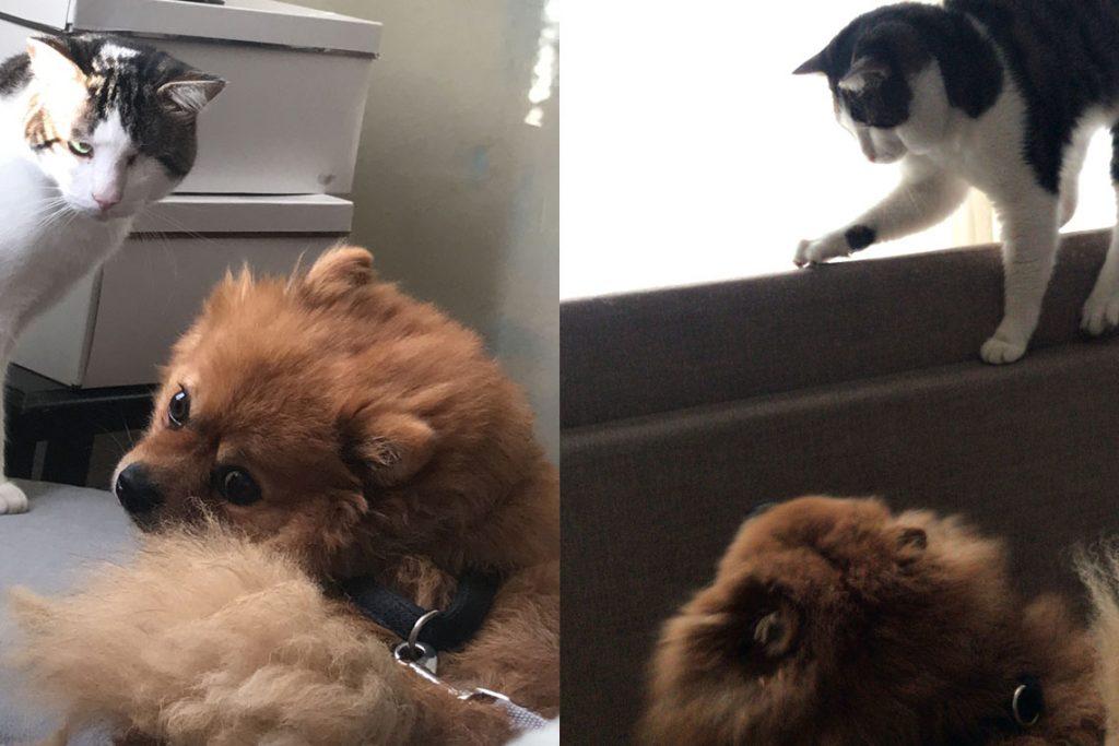 Evde Kedi ve Köpek Beslemek: Korsan ve Cyrpto
